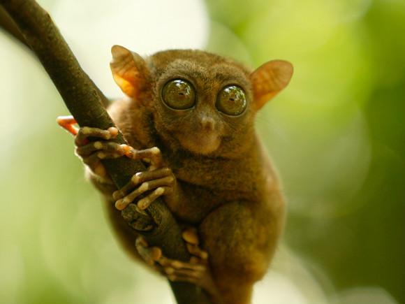 안경원숭이 보호구역 : 인터파크투어 프리야 여행정보