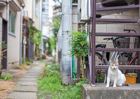 [일본] 도쿄의 고양이 마을과 블루보틀커피