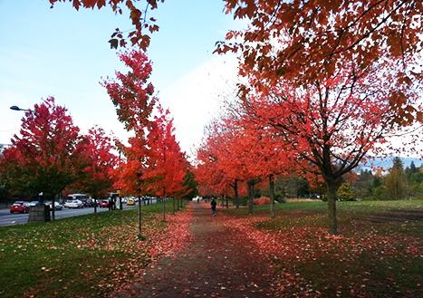 [캐나다] 캐나다 밴쿠버 가을 단풍 여행