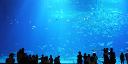 바다생물 다모였다! 아시아 최대! 제주 아쿠아플래닛